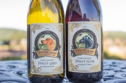 Winery Dog Series 2016 Pinot Noir